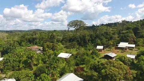 Aerial view of a giant tree (Ceiba pentandra) in Saul village Guiana Amazonian Park