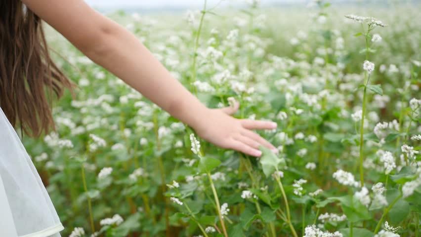 Young woman hand running through wild meadow field. Female hand touching wild flowers closeup | Shutterstock HD Video #1017222370