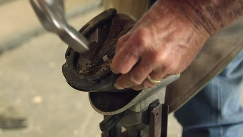 Farrier Nails Horse Shoe to Horses Hoof