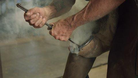 Farrier Applies Red Hot Iron Horse Shoe