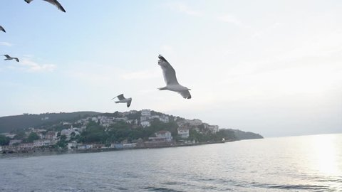 Slow Motion seagulls flying over the sea in sunset in Istanbul Islands