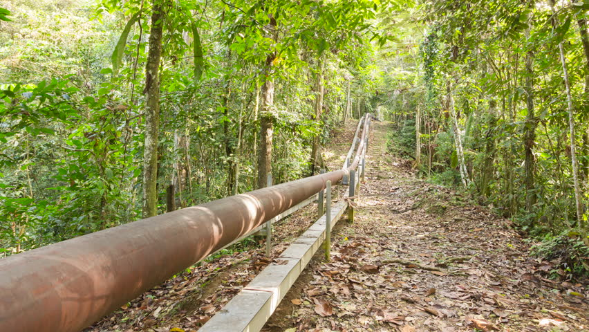 Oil pipeline running through pristine primary rainforest in the Amazon, time lapse. | Shutterstock HD Video #1017768190