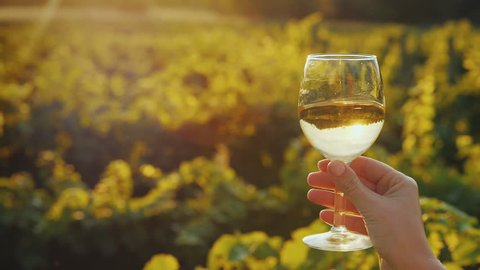 Hand with a glass of white wine on the background of the vineyard, the setting sun beautifully illuminates the glass