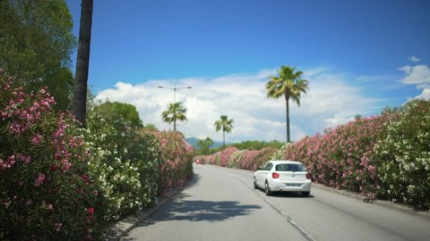 Driver's point of view, car driving along street with palms in resort city