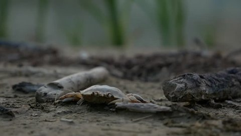 Dregs and sediments at the banks of a dried canal. The rotten crab establishes a gloomy and horrific mood.