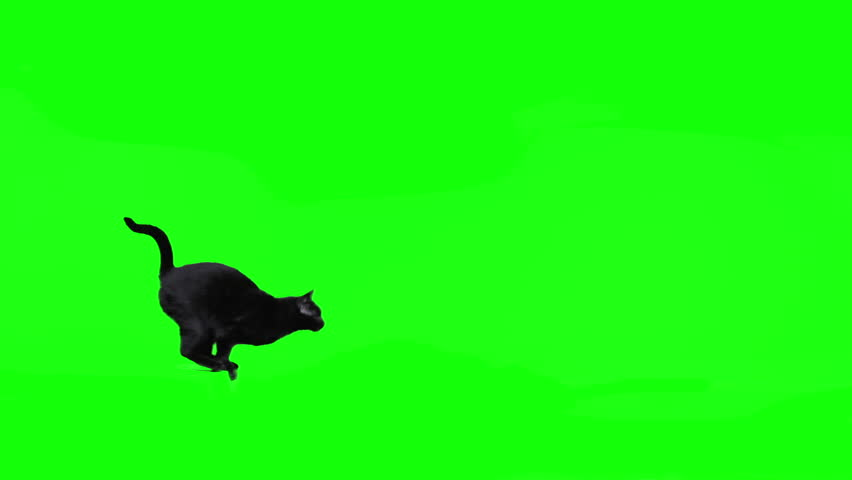Black cat jumping against green screen