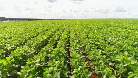 Flight over a soybean plantation in a Brazilian farm.