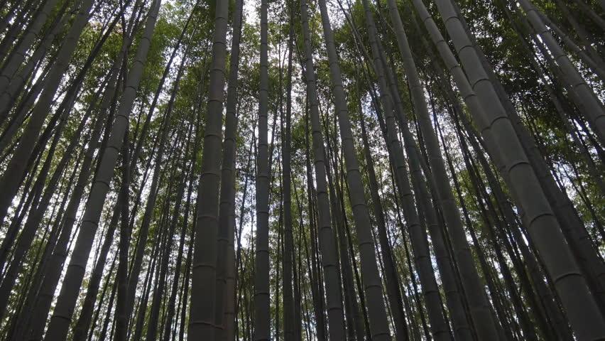 POV sideway shot of hiking through bamboo forest in Arashiyama, Kyoto, Japan | Shutterstock HD Video #1020051130