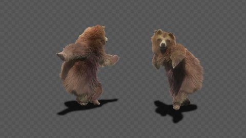 bear CG fur 3d rendering animal realistic CGI VFX Animation  Loop alpha dance composition 3d mapping