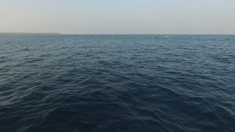 dolphins in the morning, wakatobi, southeast sulawesi, indonesia
