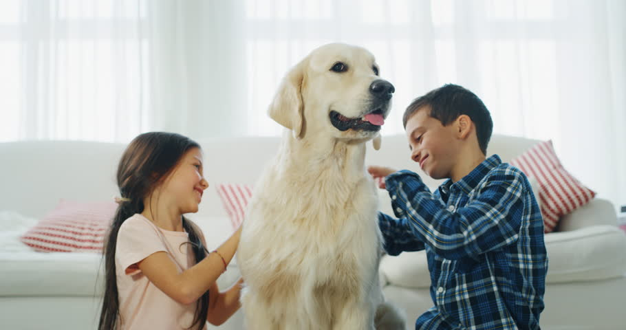 Slow motion of little brother and sister cuddling their dog in living room. Shot with RED camera in 8K. Concept of love for animals, childhood, pedigreed dog | Shutterstock HD Video #1020812650
