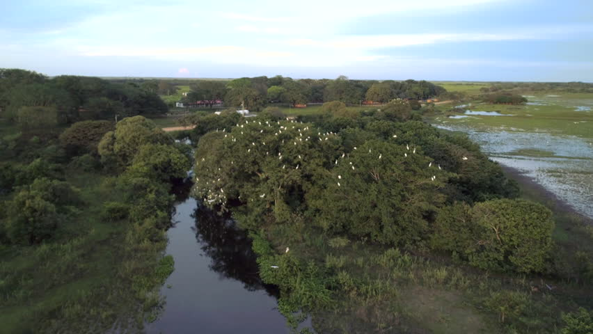 Aerial view of the beautiful landscape of trees and birds, white herons fly over the river to reach their nests, an exciting adventure of animal life | Shutterstock HD Video #1021153570