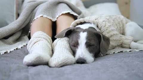Female Feet In Knitted Socks And Dog Sleeping On Bed. Coziness Concept.