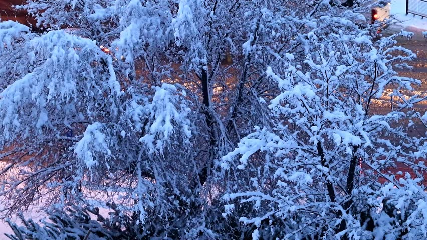 Snow-covered pines and trees on a city street and road | Shutterstock HD Video #1021916290