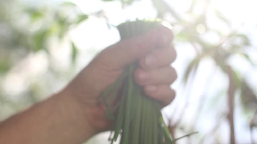 Hand and chives in the farm. | Shutterstock HD Video #10221800