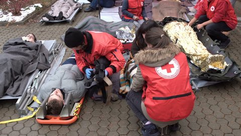Sofia, Bulgaria - 5 December 2018: Volunteer paramedics from Bulgarian Red Cross Youth provide first aid with a stretcher and space blanket during a training for saving people in an accident.