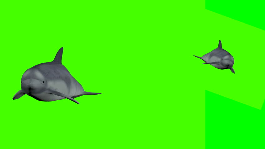 Two playful dolphins on a green screen.  #1022378260