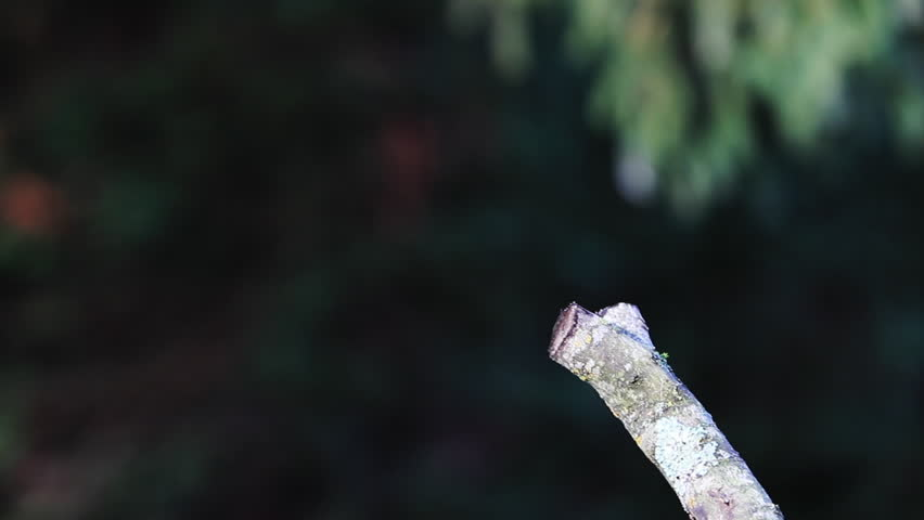 A Robin landing on a branch in a garden | Shutterstock HD Video #1022798860