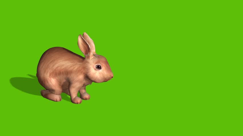 Animation of two rabbits for Easter, set against a green screen to be able to place your own text or video  | Shutterstock HD Video #1022812810