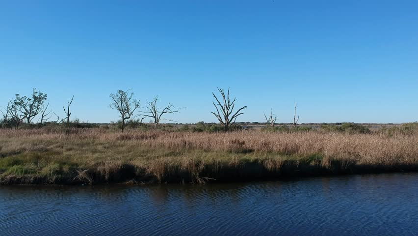 Tracking shot over grass covered island deep in the bayou with barren trees and clear blue sky | Shutterstock HD Video #1022819860