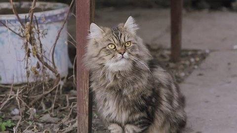 Fluffy sad alone street cat sitting on road on city street. Abandoned homeless pet outdoors