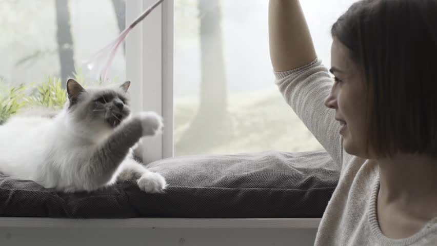 Happy cute cat lying next to a window and playing with her owner at home, she is catching a toy with a ribbon | Shutterstock HD Video #1023247390