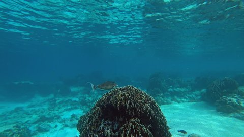 Underwater world of Similan islands, corals and tropical fish, Thailand