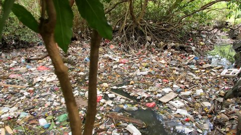 Huge Dump in Tropical Mangrove Tree Forest. Plastic Waste Rubbish Floating in Lake Water. Environmental Pollution Ecological Problem Concept. 4K. Bali, Indonesia.