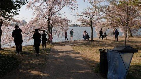 Washington, D.C. May 22,Washington DC Cherry Blossom Festival, Gimbal shot of tourists taking photos at the Tidal Basin, 3 Axis Gimbal