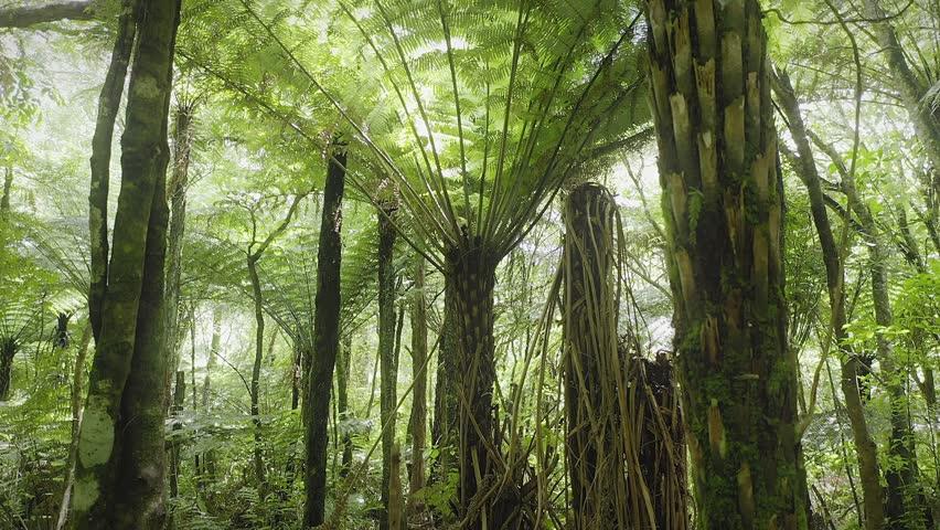 Aerial: Slider shot of tropical fern trees in native forest interior. Coromandel Peninsula, New Zealand    Shutterstock HD Video #1024380950
