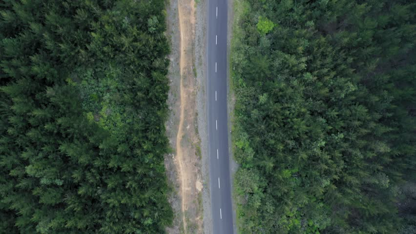 Aerial flying over a car on a winding road & renewable pine forest  #1024381070