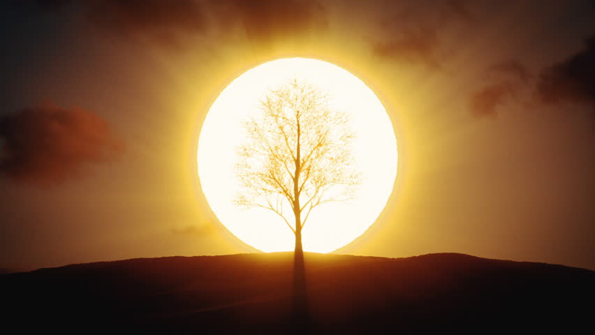 Quickly growing tree on the background of the sunrise #1024647710