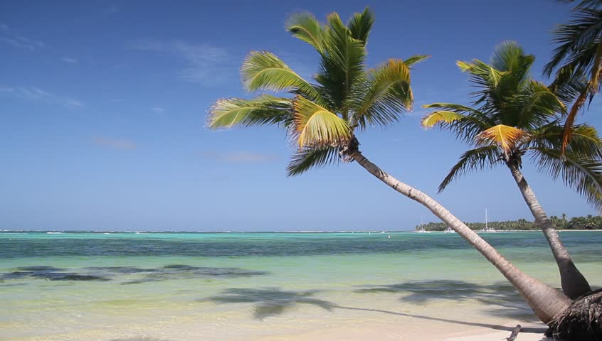 Tropical beach with coconut palm tree and white sand on caribbean coastline