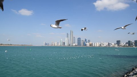 Birds flying with Abu Dhabi skyline in the background.