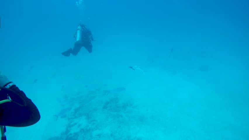 Scuba diver off the coast of Playa del Carmen swimming with remora fish. | Shutterstock HD Video #1025228090