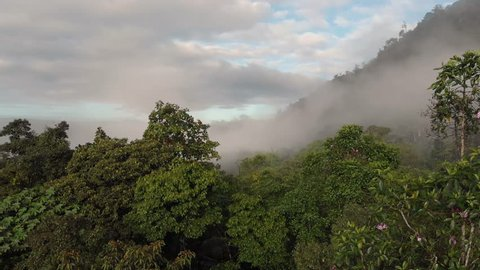 Fog in a humid forest where you can see its vegetation and a lot of fog. Cloud forest effect is only perceived during the morning. Mindo, Ecuador (drone view)