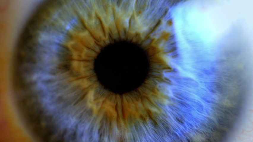 Human eye iris contracting. Extreme close up. #1025449160