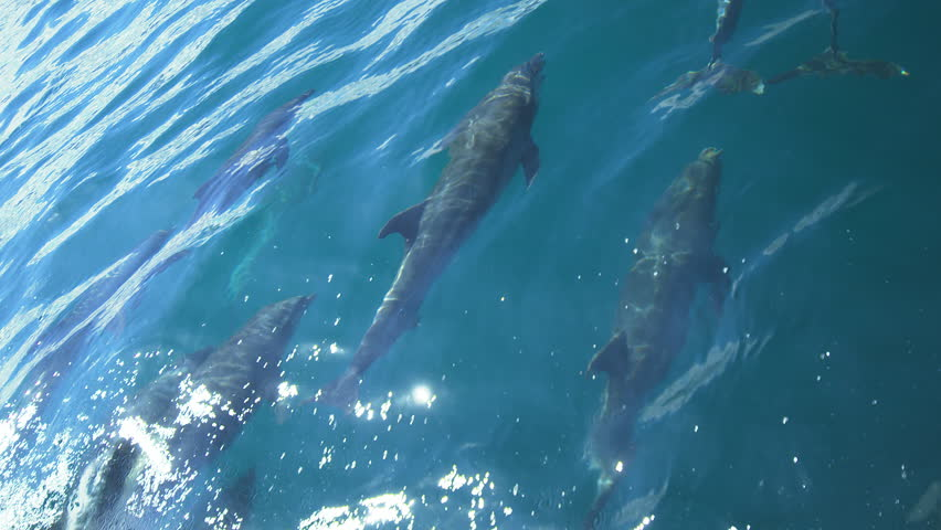 Jumping dolphins on Galapagos waters #1025461790