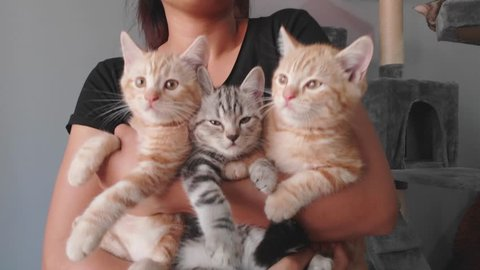 Three Kittens being held by woman. Woman Holding three Kittens. Woman holding a cat. girl with a cat in her arms.