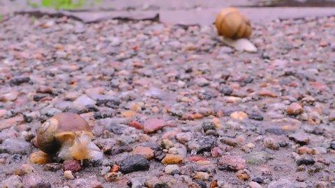 Snails is crossing the street