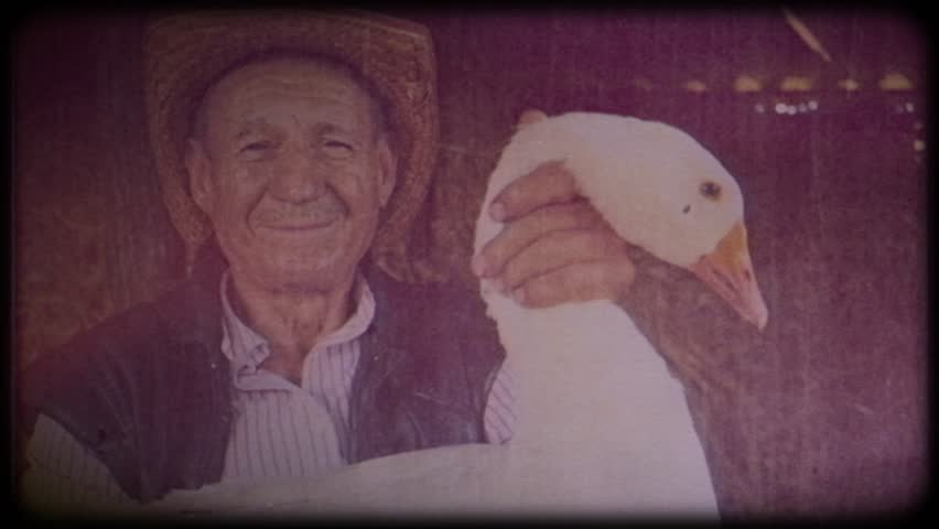 A farmer in a straw hat holds a large white goose.Video archive. Retro. Vintage. Farm animals. Raising animals for meat. Portrait of an elderly farmer. Agriculture. Organic food. Ranch. Not vegetarian | Shutterstock HD Video #1025821760