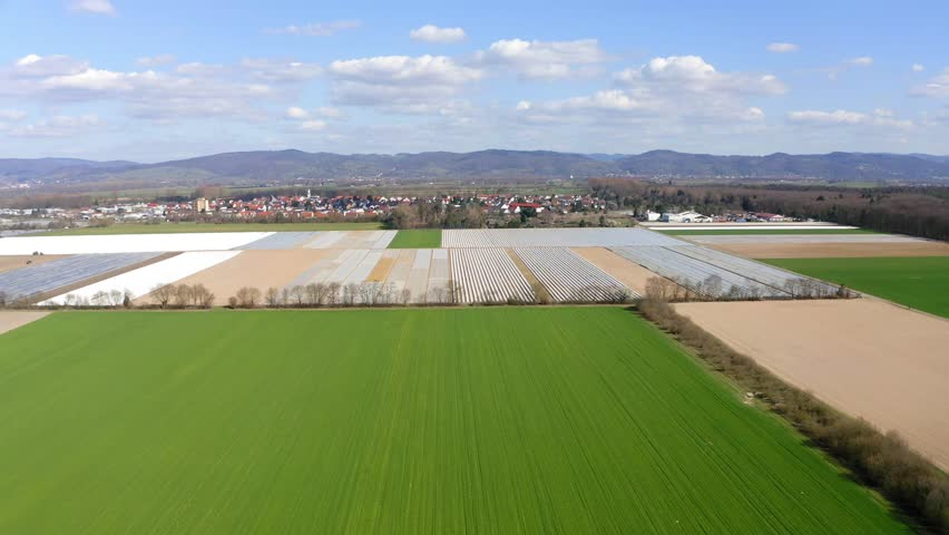 Aerial view , flight to Asparagus fields, asparagus covered with white tarpaulin, Bergstrasse, Hesse, Germany