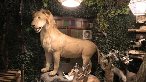 Doha, qatar - february 17, 2019: embalmed lion in animal embalmer store of  traditional souq waqif in doha, selling trophies and embalmed animals