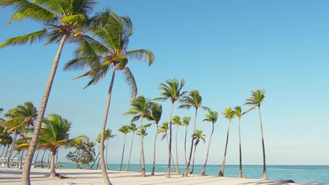 Tall beautiful freestanding palm trees on the beach. Big wild beach and blue sea. Vacation in Caribbean/Background for relaxation. Palm trees and white sand. Isolated Island palms beach sand Hawaii