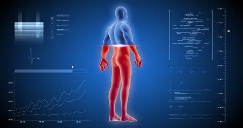 Man full body scan 3D skelet inside, anatomy in x-ray UI