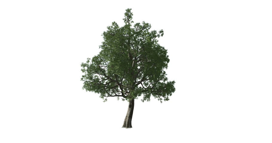 Animation video of a tree growing from the bark up. Tree growth sequence.  | Shutterstock HD Video #1027248710