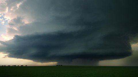 Cattle Run In Front of Supercell Storm