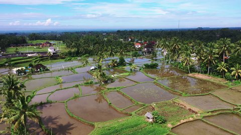 Aerial view of rice field. Green rice and vegetable fields in poor village in Asia. Terraced rice and field farm in the mountain and rural village with workers. Traditional agriculture and sustainable