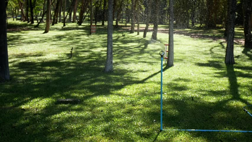 Garden Irrigation. Automatic sprinkler watering system for plants and lawn | Shutterstock HD Video #1028204000