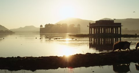 A view of the Jal Mahal with pigs crossing a bank. In Jaipur, India.